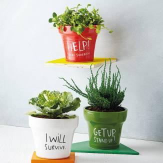 lyrical plants